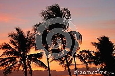 Sunset palmowi drzewa