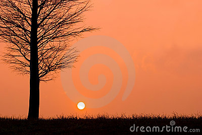 Sunset in a peaceful evening, field view.