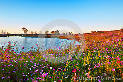 The sunset perennial coreopsis scenery