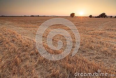 Sunset on Plateau of Valensole, Provence, France