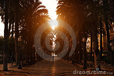 Sunset promenade with palms along it, Spain