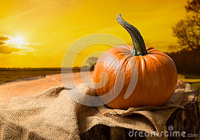 Sunset Pumpkin