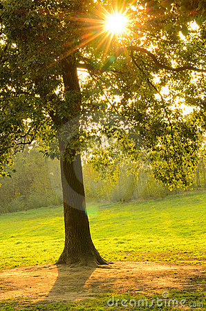 Free Sunset Rays Trough Leaves Royalty Free Stock Photography - 22387047