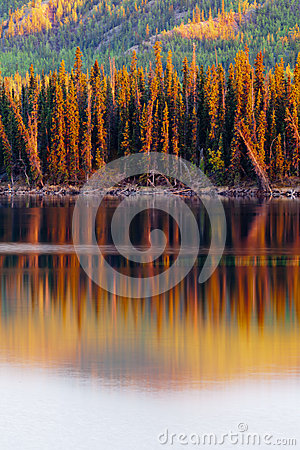 Sunset reflections on boreal forest lake in Yukon