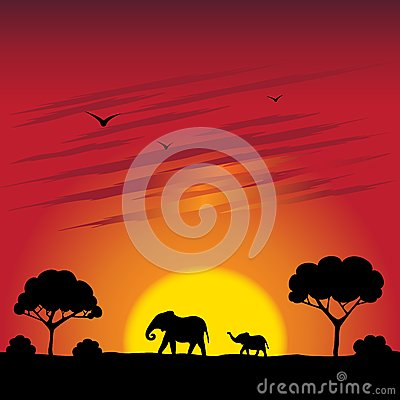 Sunset on a savanna