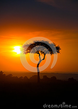 Sunset on the Savanna, Portrait