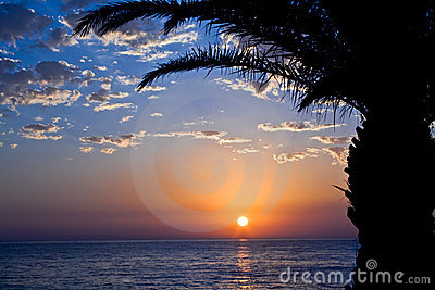 Sunset with sea and palm