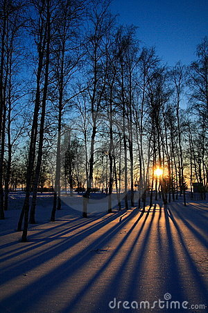 Free Sunset Through Leafless Trees In Winter Stock Image - 5079931