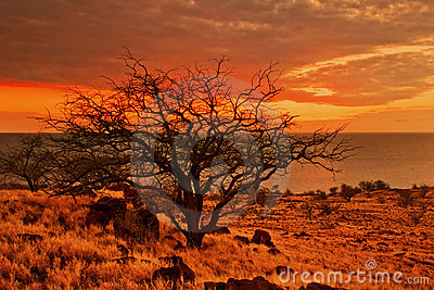 Sunset tree of Hawaii