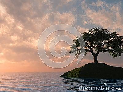 Sunset Tree Holm