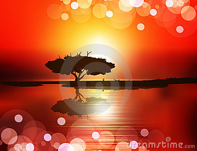 Sunset (tree on the water against the setting sun)