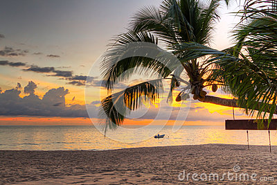 Sunset under tropical palm tree