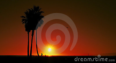 Sunset on Venice Beach, United States