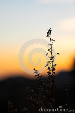 Sunset view with the silhouettes of herbs and plants Stock Photo