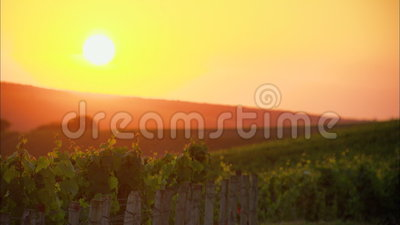Sunset on a vineyard in France stock video footage