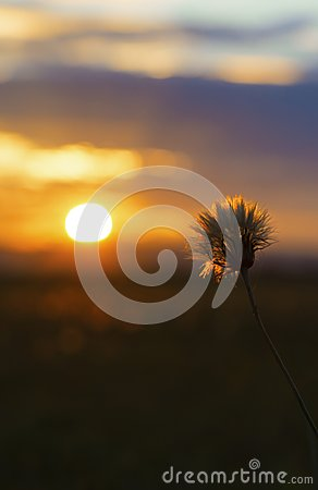 Free Sunset Wallpaper Background Royalty Free Stock Photography - 103172787