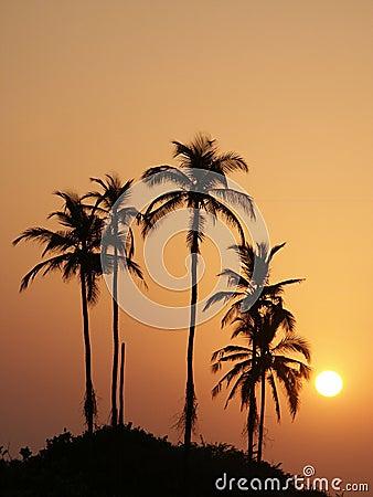 Free Sunset4 Stock Photography - 522562