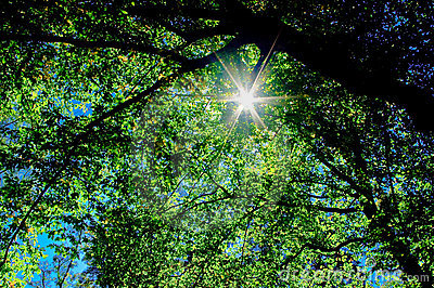 The sunshine into branches tree