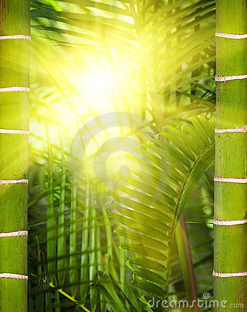 Sunshine in the jungle