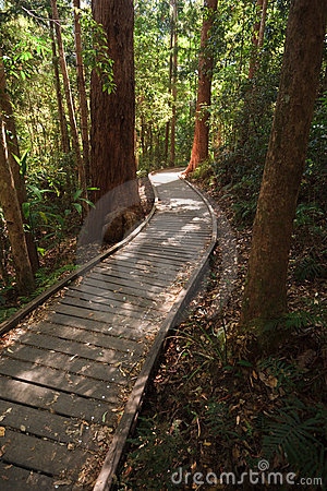Free Sunshine On Wooden Boardwalk In The Rainforest Stock Images - 12124024