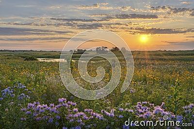 Sunshine over the flower field
