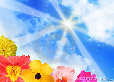 Sunshine Rays and Bright Flowers