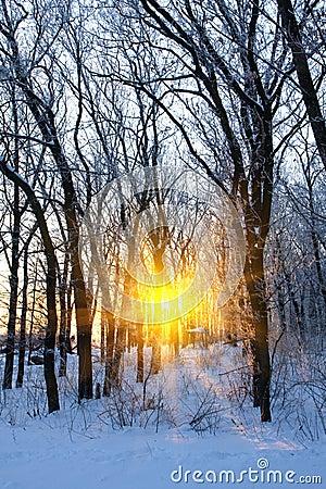 Sunshine in winter forest