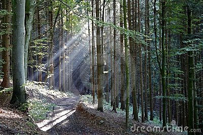 Sunshine in a wood