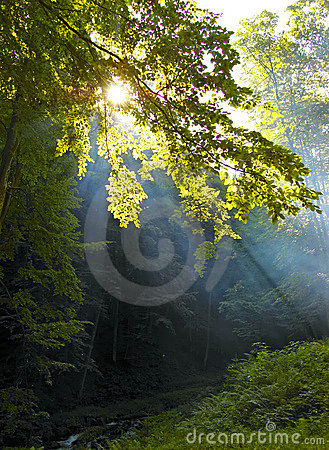 Sunshine in the  wood
