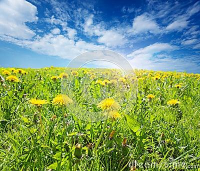 Sunsplashed meadow