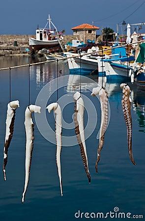 Free Suntanned Octopus Stock Photo - 15722270