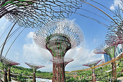Super tree groves in Gardens by the Bay