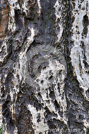 Superfície, cor e textura de pedra