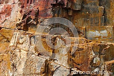 Superfície de madeira fóssil