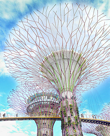 Supertrees between bridge at Gardens By the Bay Editorial Stock Photo