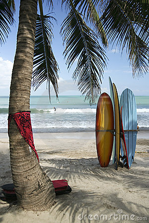 Free Surf Boards Palm Tree Kuta Beach Bali Indonesia Stock Photo - 6280090