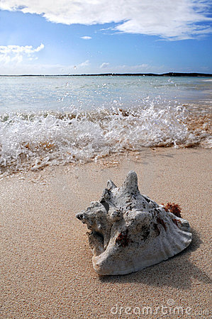 Surf Splashing on Sand with Sea Shell