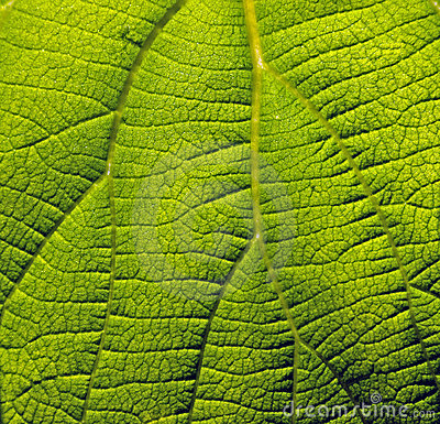 Surface of green plant
