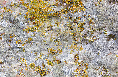 Surface of the old stone with yellow green moss