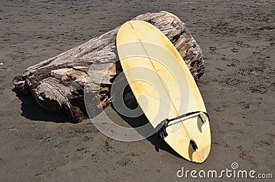 Surfboard on a treestump on volcanic sand beach