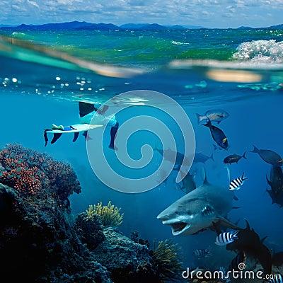 A surfer and wild shark underwater