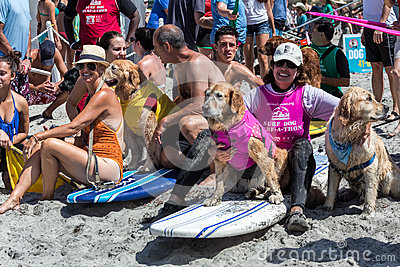 Surfing dogs, surfboards, people on beach Editorial Photo