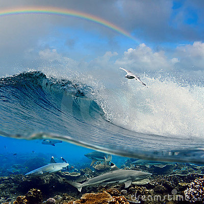 Free Surfing Wave Seagull Coral Reef Sharks Underwater Royalty Free Stock Photos - 17455498