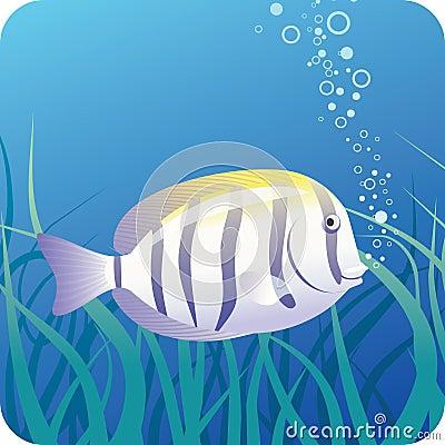 Surgeon fish under water