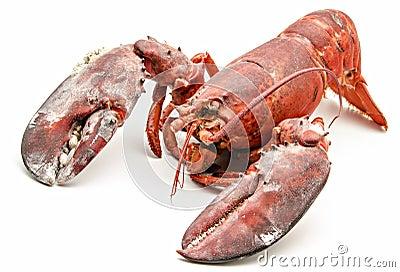 Surowy homar