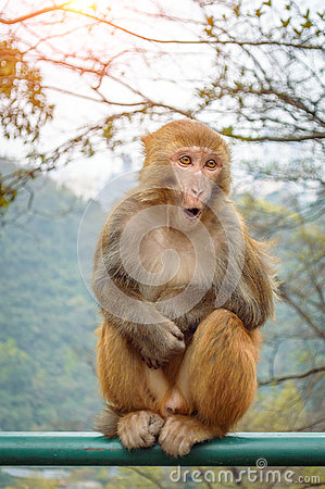 Free Surprise Monkey Portrait Royalty Free Stock Images - 82745119