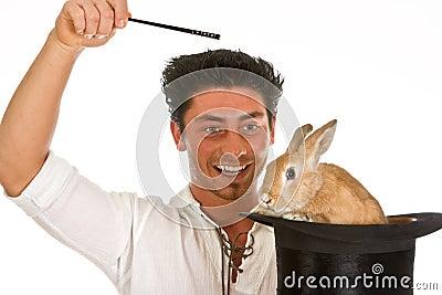 Surprise rabbit