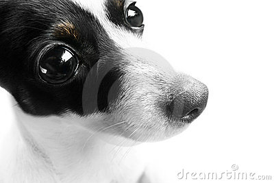 surprised dog face stock photography image 16572292
