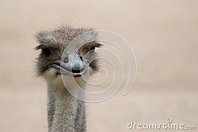 Surprised Emu
