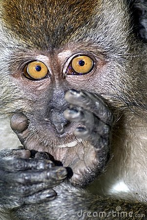 Surprised monkey expression
